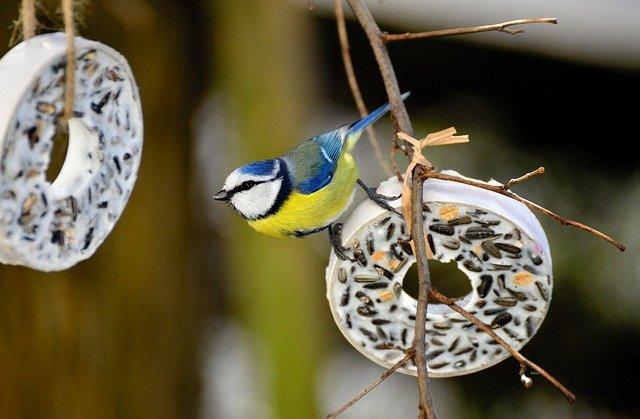 Wildvögel ganzjährig füttern und Meisenknödel kaufen.