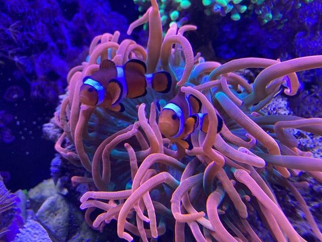 Meerwasseraquarium