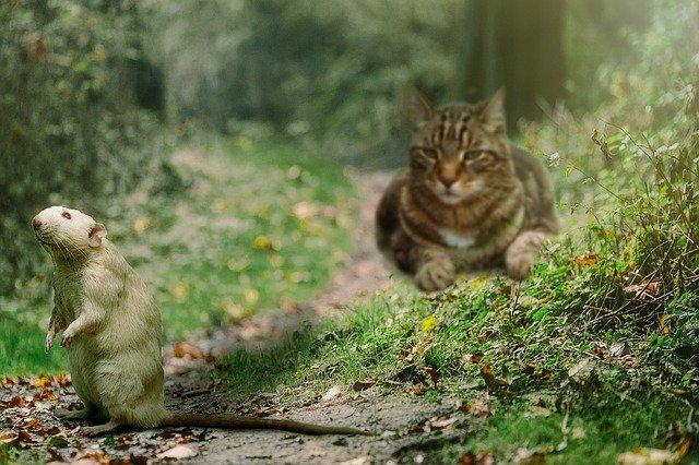 Was ist das beste Katzenfutter?