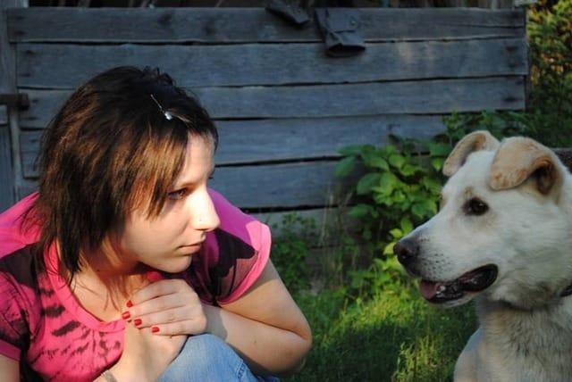 Ein Hundezaun kann für Frieden in der Nachbarschaft sorgen.