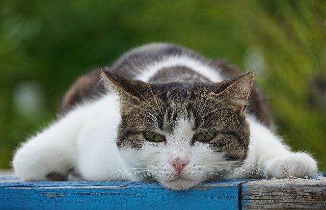 Katzenurinentferner im Test.