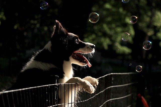 Unsichtbarer Hundezaun und was du beim Kauf beachten musst.